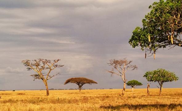 Sudáfrica y Ruta Jardin