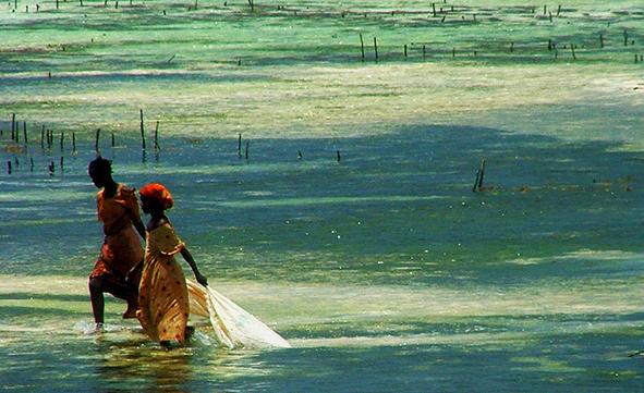 Kenia y Playas de Zanzibar